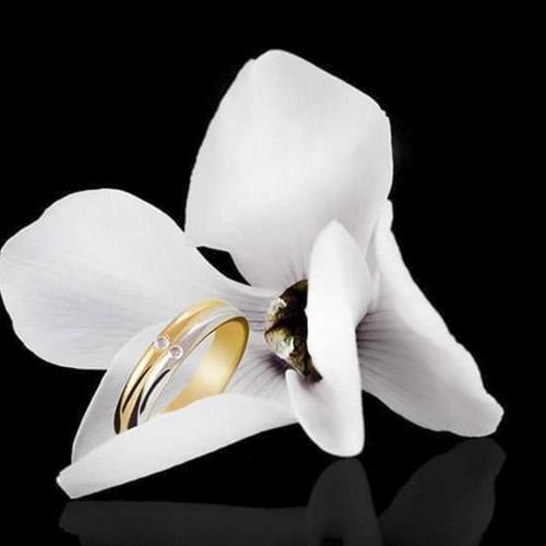 Bagues en or poli avec brillant
